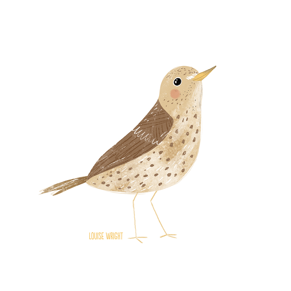 song thrush louise wright.jpg