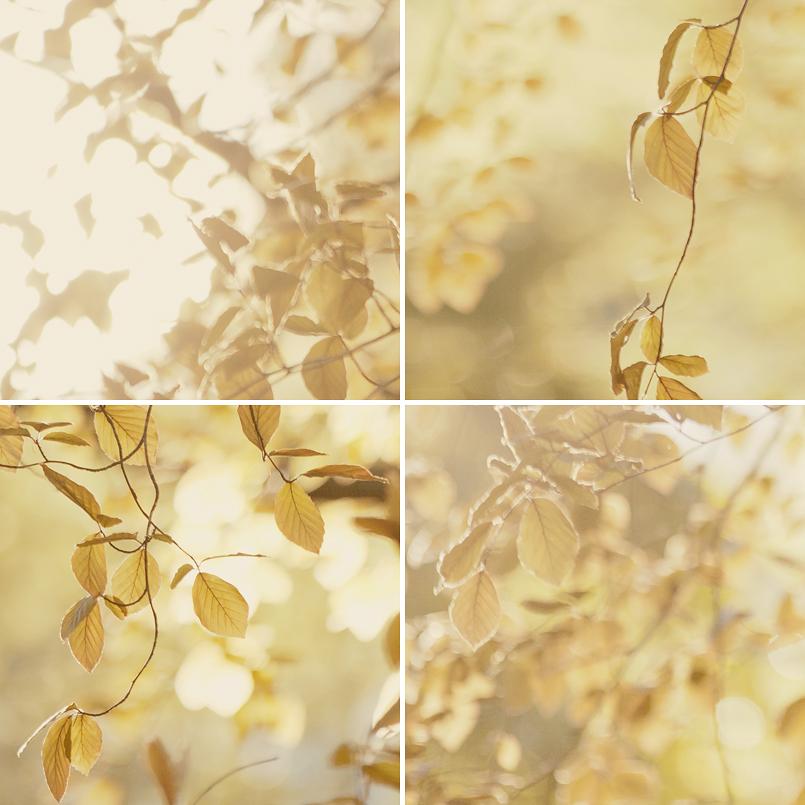pretty leaves.jpg
