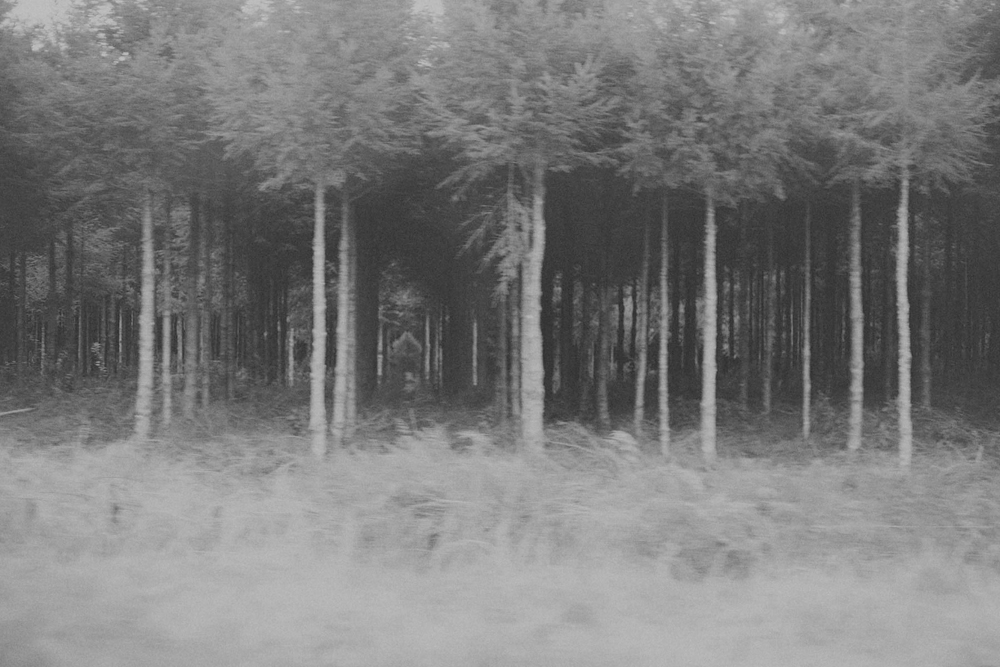 Road trip photo of trees, movement.