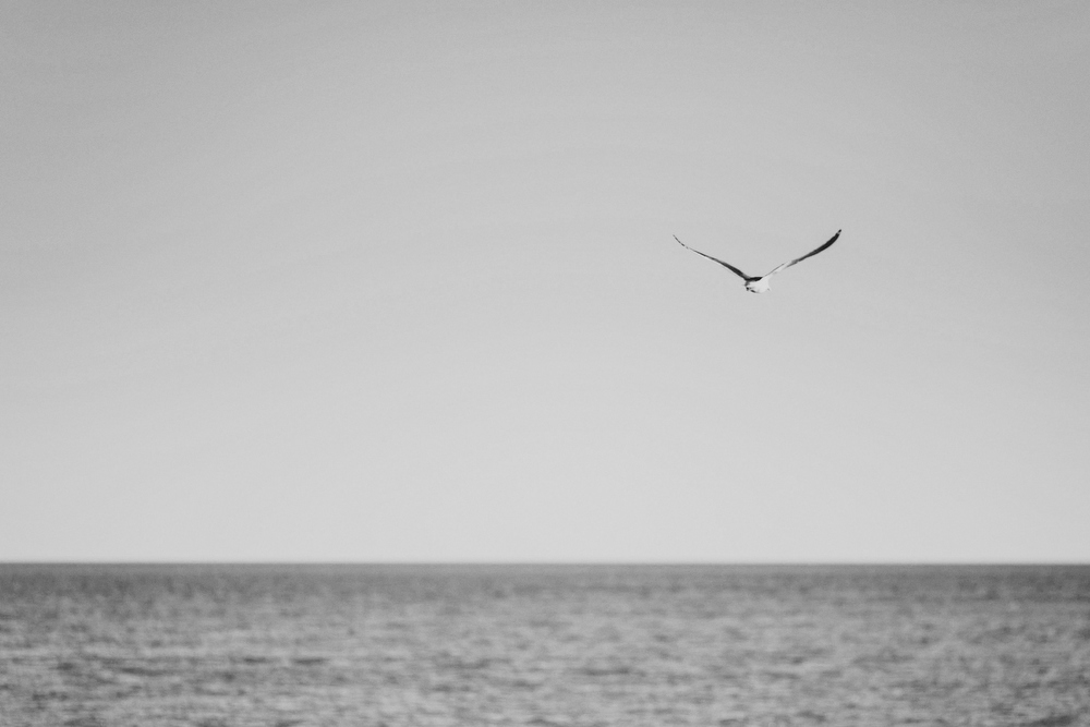 Seagull flying over the ocean.