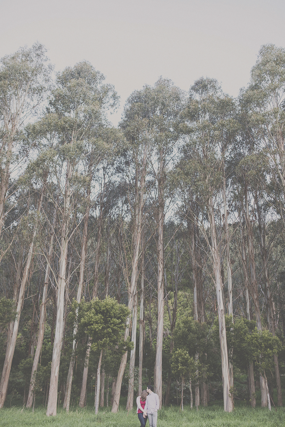 Couple kissing tenderly with tall eucalyptus trees behind them. Photography by Jenny Siaosi.