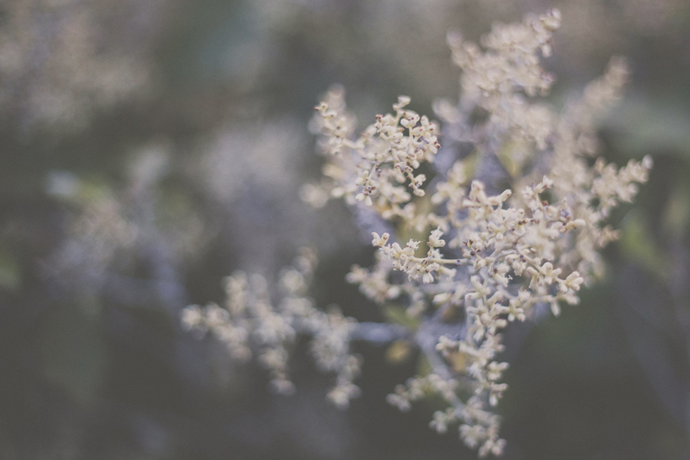 Floral detail.