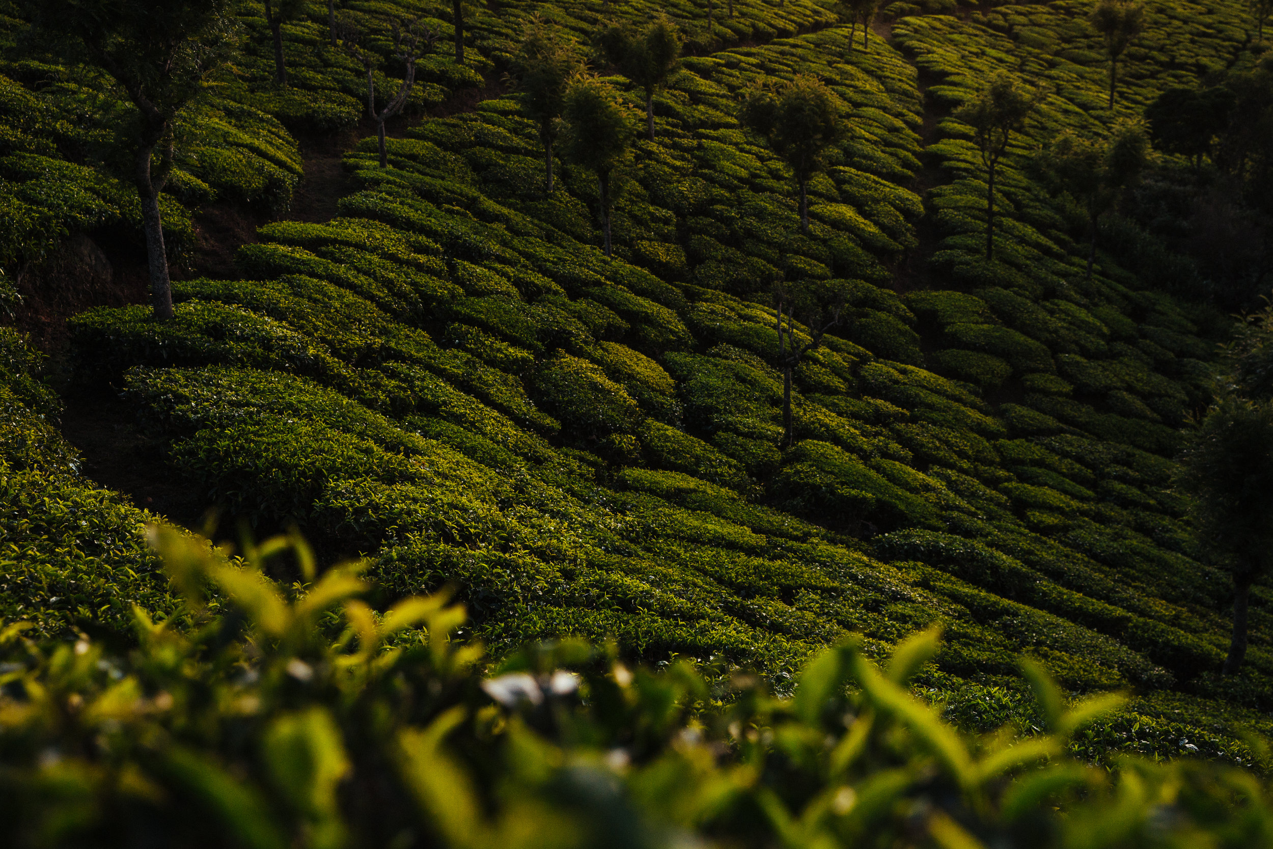 Honest Tea-8.jpg
