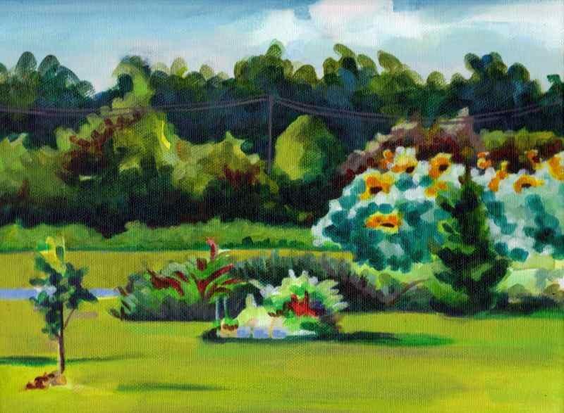 Sunflowers, Apple Farm