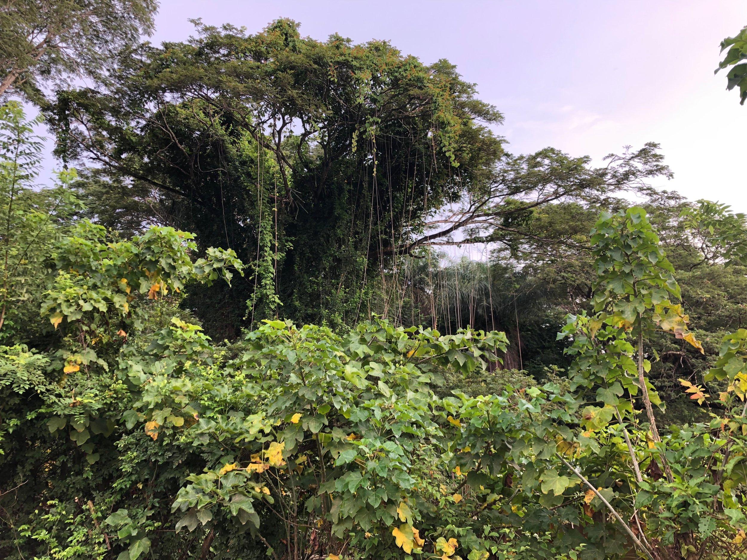 Wet Meadow near Tarcoles