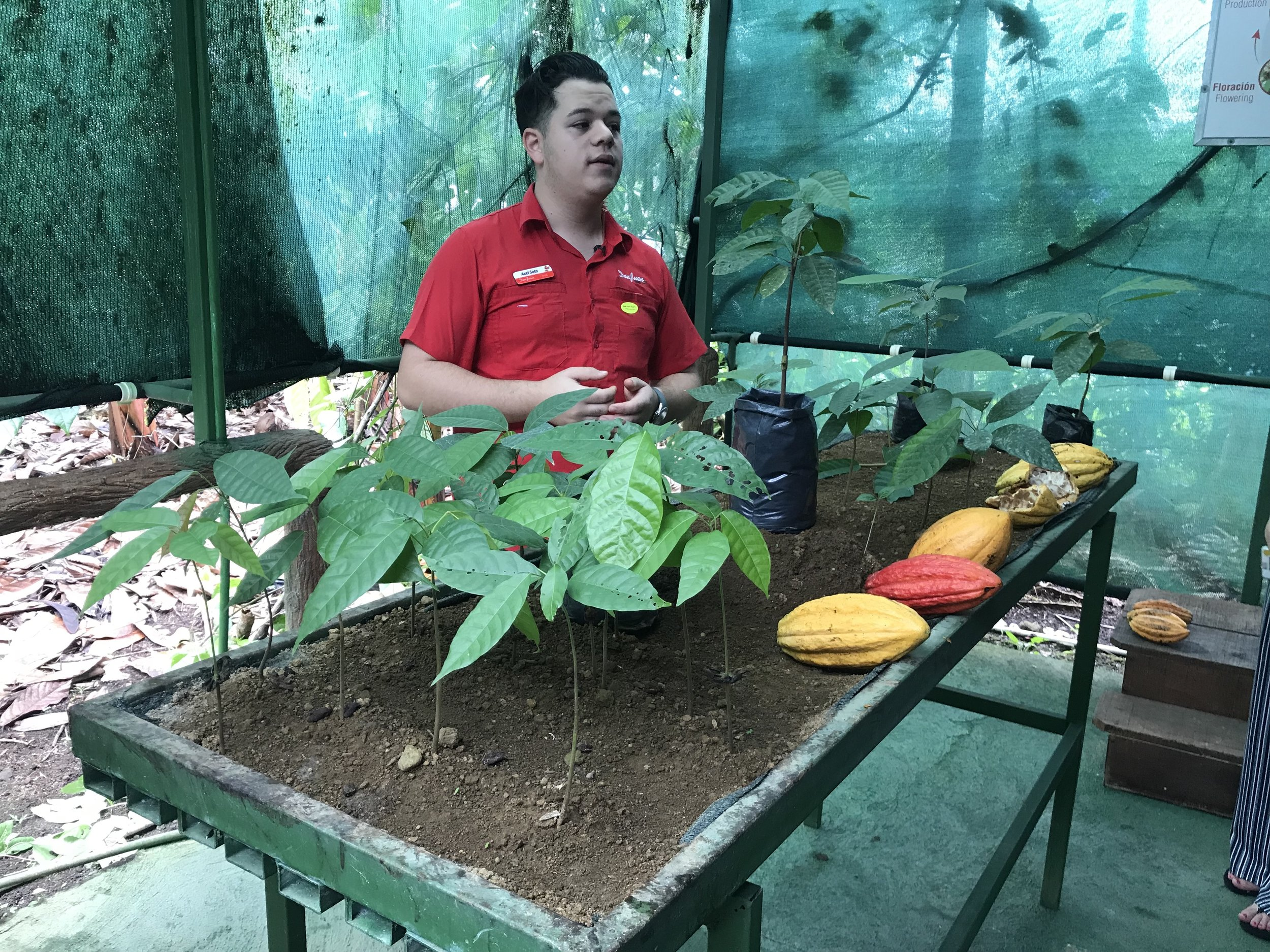 "We did take a ""chocolate and coffee tour"" while we were in La Fortuna. The company we toured was Don Juan. It was a little expensive ($180 for the five of us). However, it was very well done and we throughly enjoyed it. They gave use a complete overview of how chocolate and coffee are grown, havested and turned into yummy stuff."