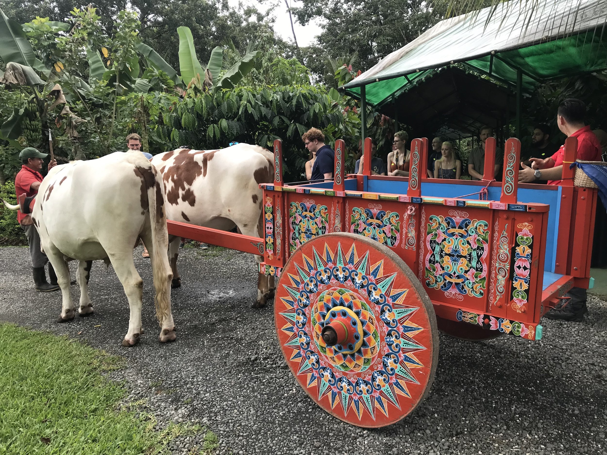 A traditional ox cart.