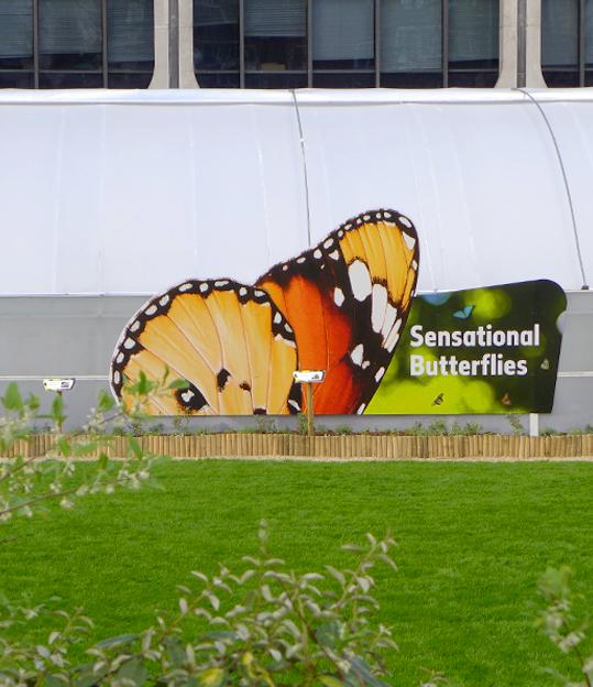 CChorus_NHMButterflies2.jpg