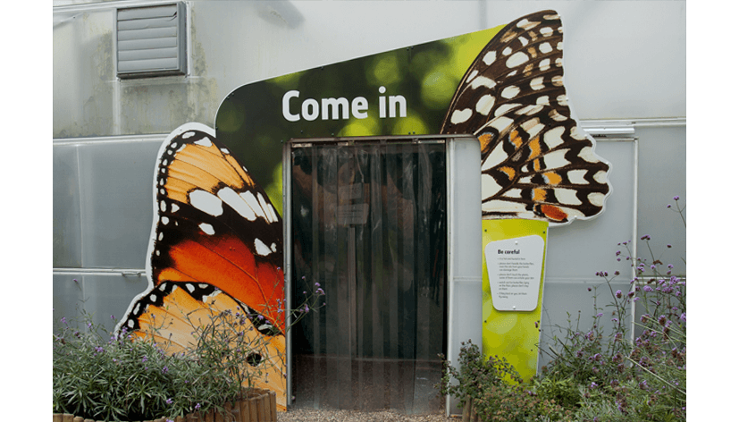 cchorus_NHMSensButtflies9.png