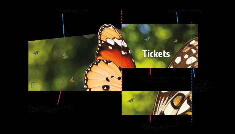 cchorus_NHMSensButtflies14.png