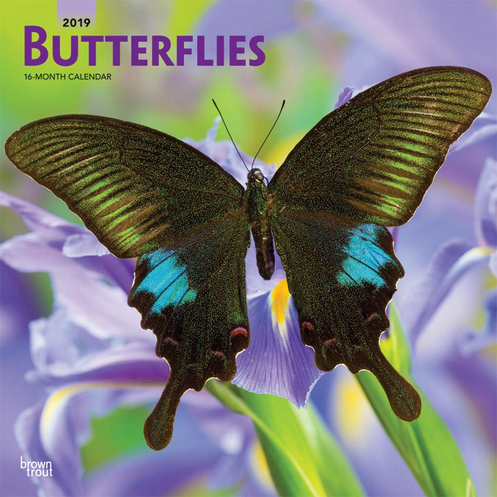 0247-1__Butterflies__BT_12SQ19_v00_CVR_RGB_1000.jpg