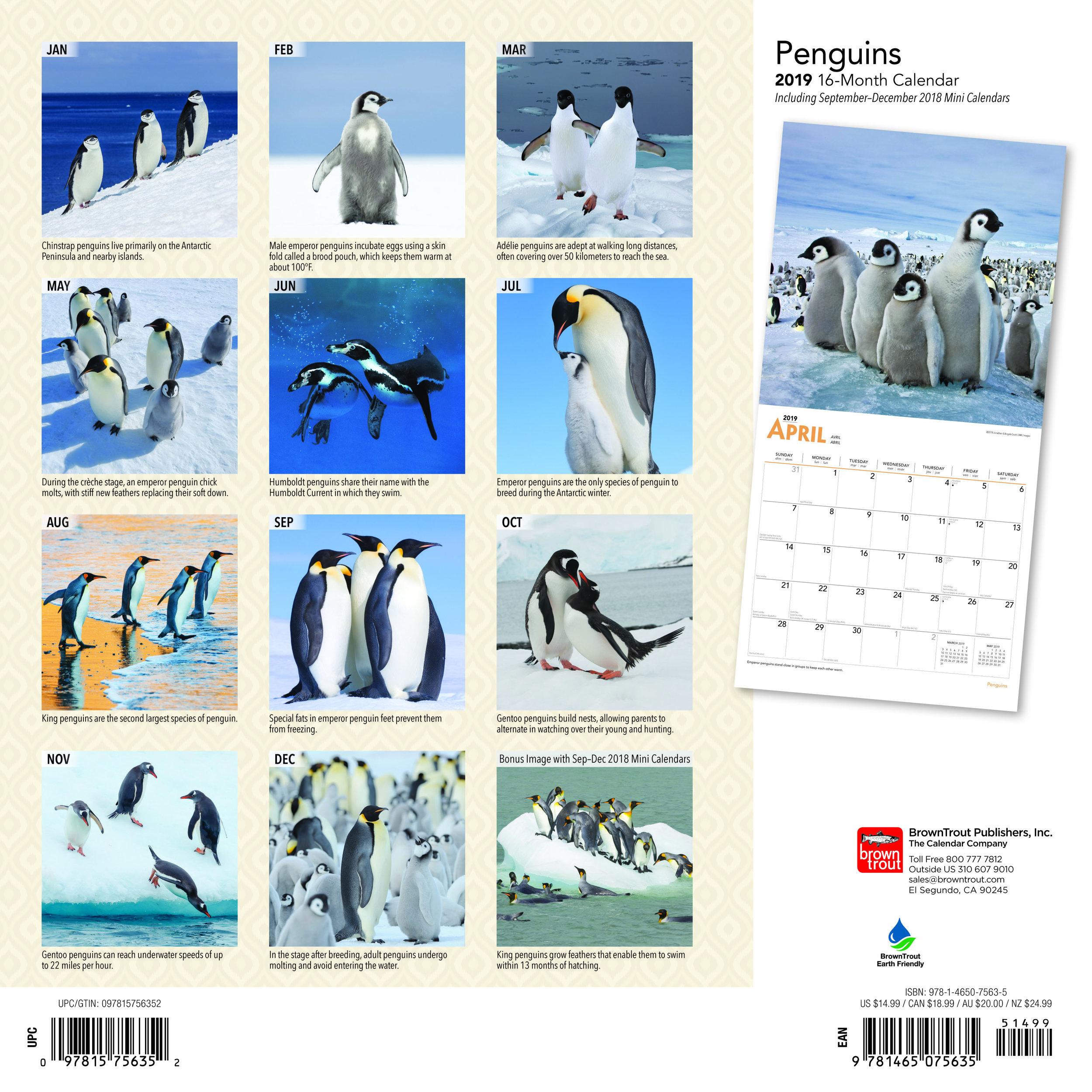 7563-5__Penguins__BT_12SQ19_v00_BKC.jpg