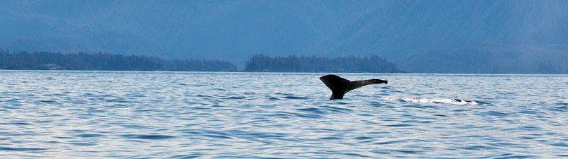 2138-whale.jpg