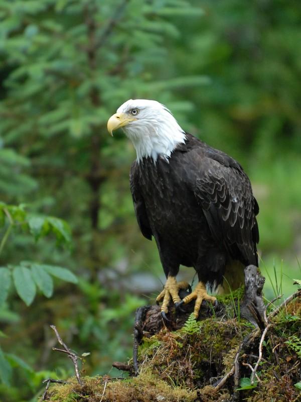 14 Adler.jpg