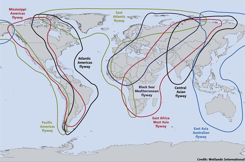 Source :  Wetlands International, via FAO