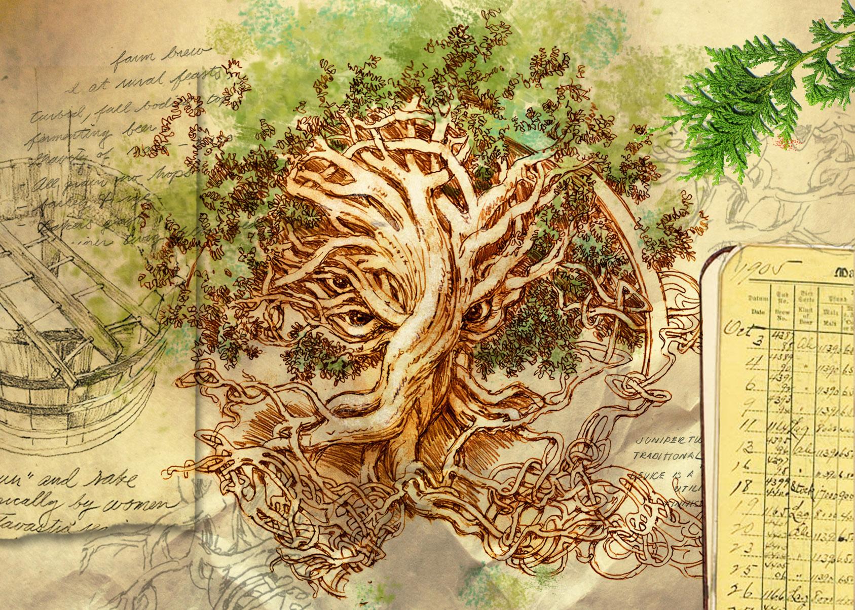 portfolio juniper tree #2.jpg
