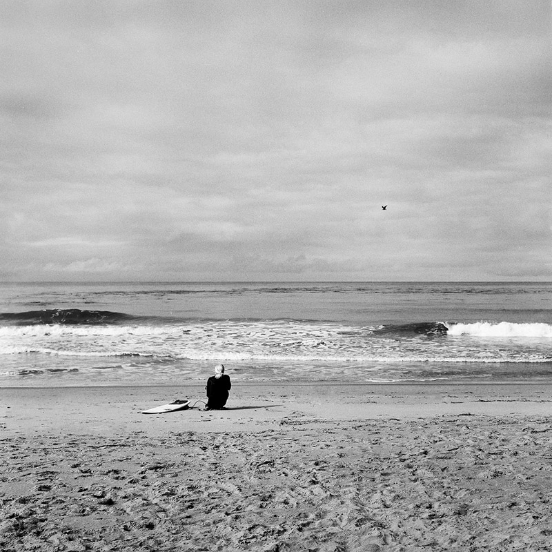 surfer and seagull