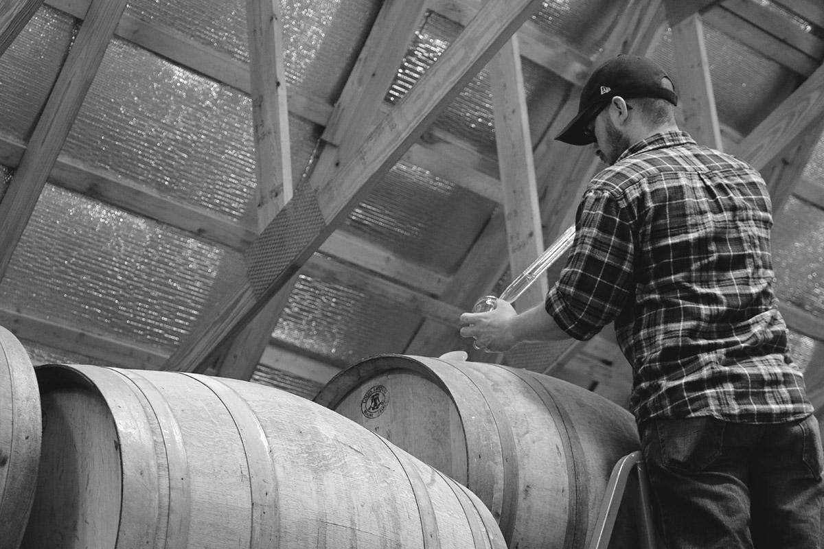 Head Cider Maker, Seth Boeve, pulls samples from the barrel.