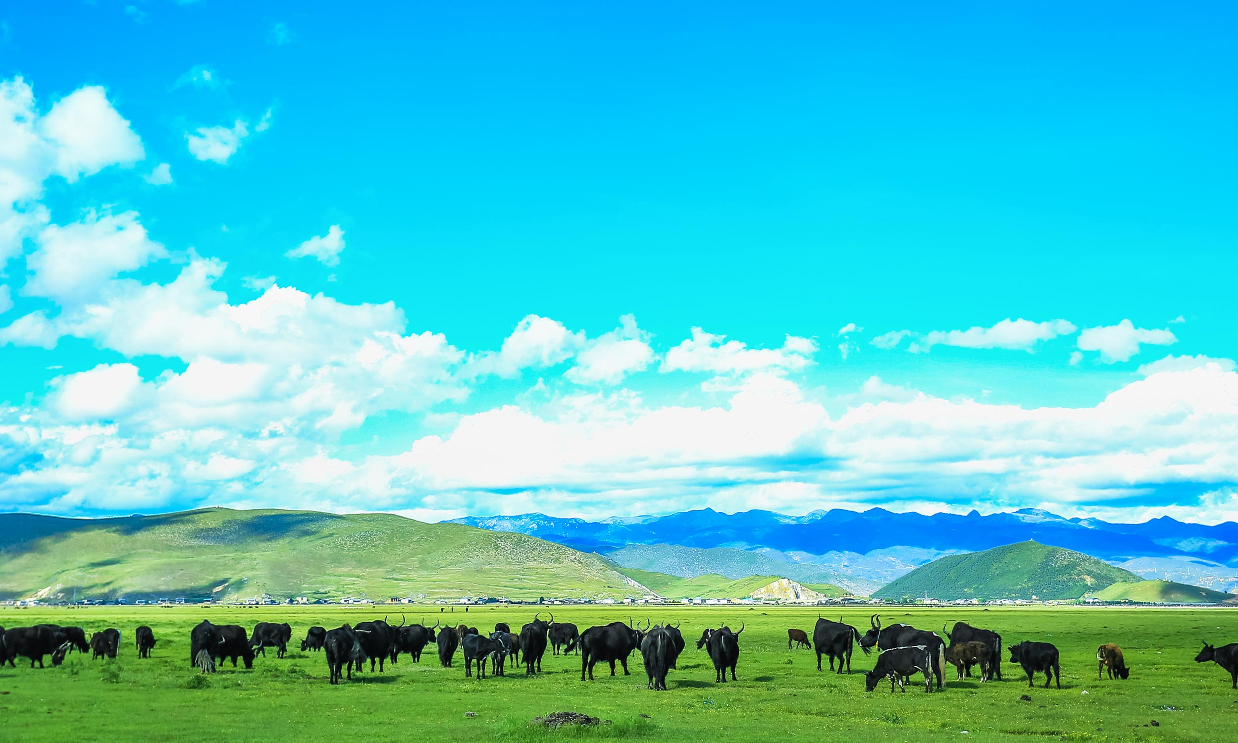 The highlands near Shangri-La in the Yunnan province.
