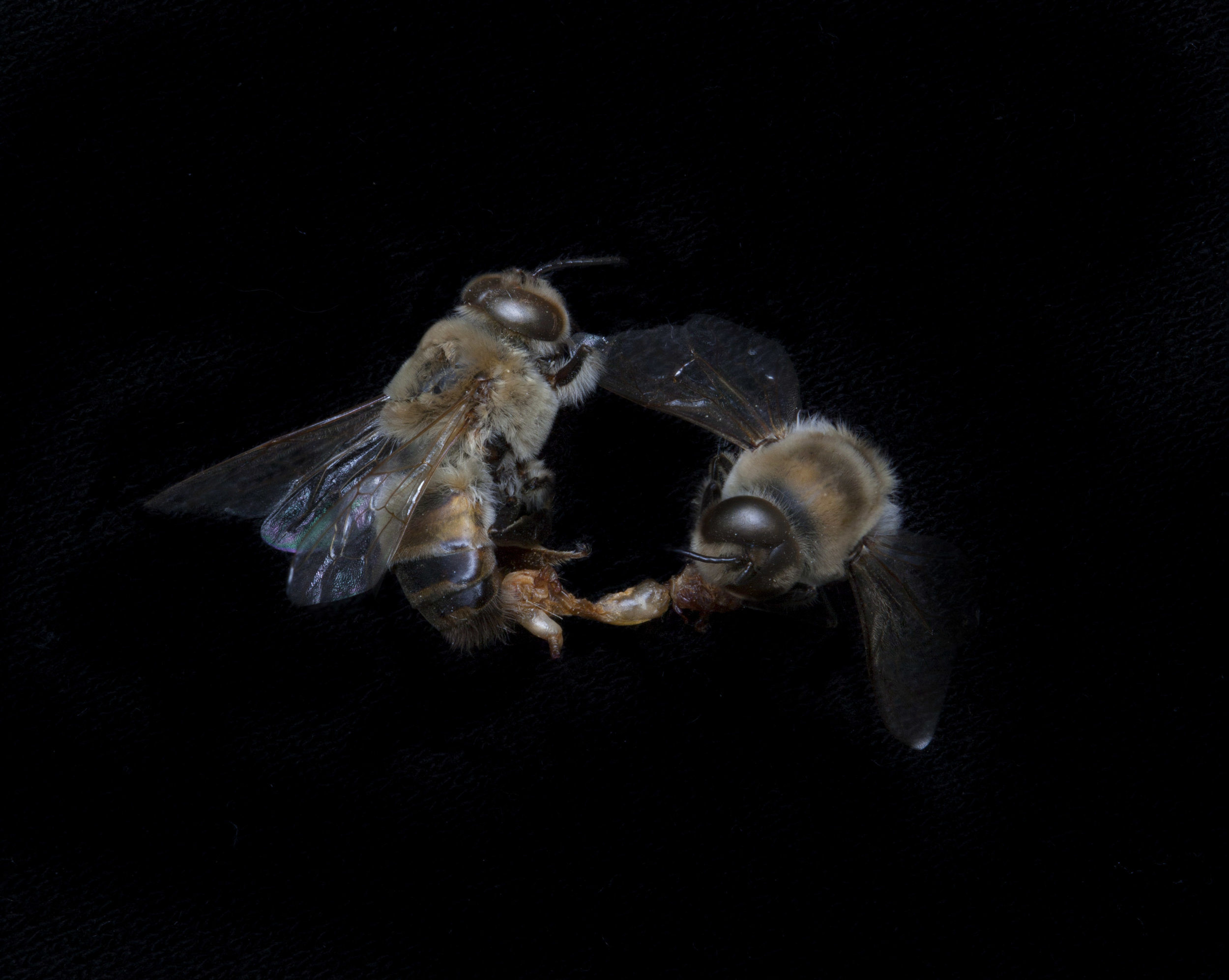 The BEES!.jpg