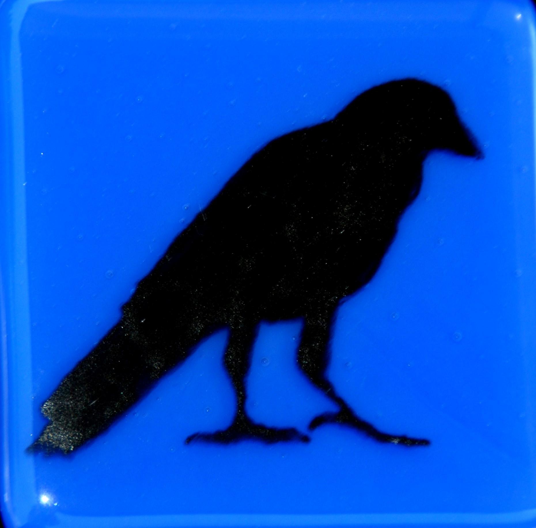 crow III on blue tile.jpg