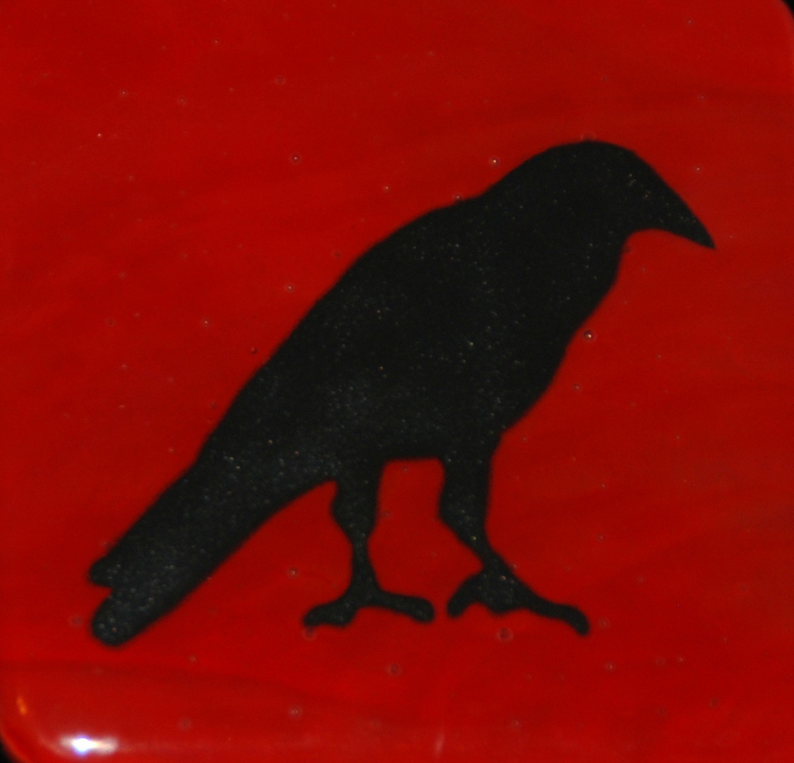crows and ravens 027.JPG