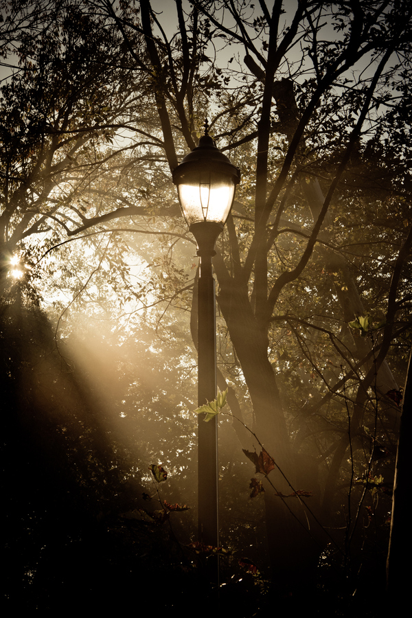 Lamppost in the Mist