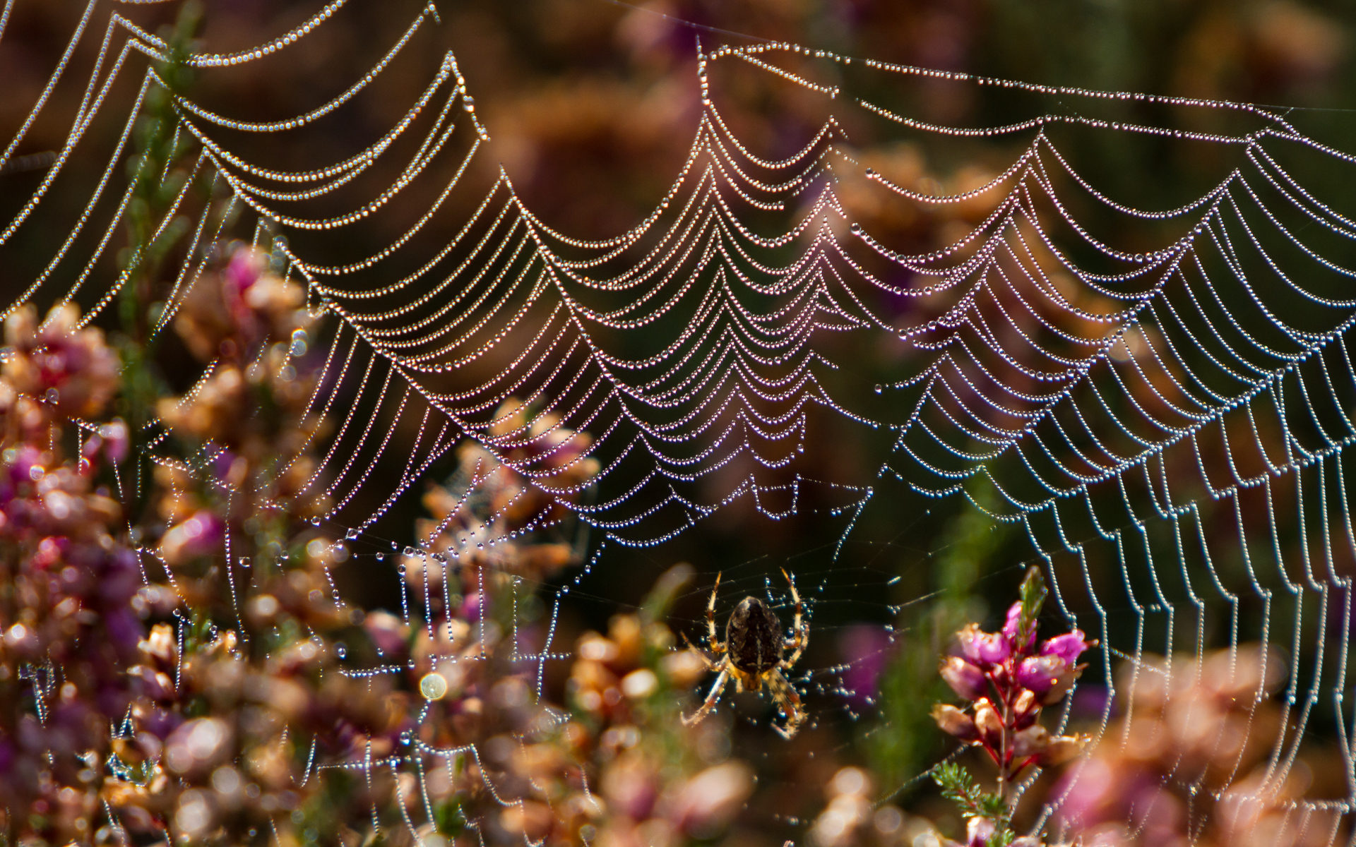 Dew forms on a spiders web