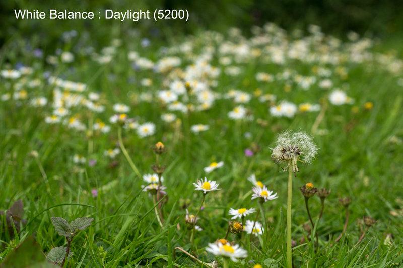 Daylight (5200)