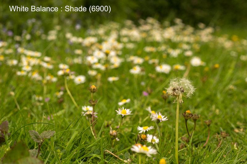 Shade (6900)