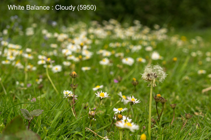 Cloudy (5950)