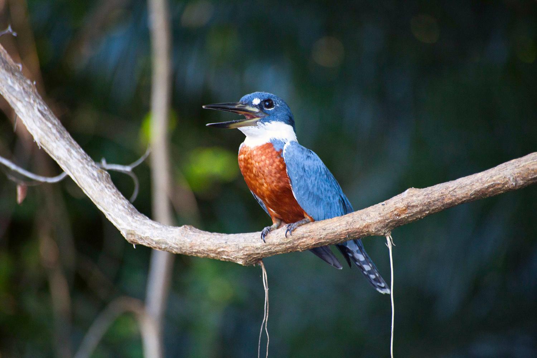 Pantanal-1162.jpg