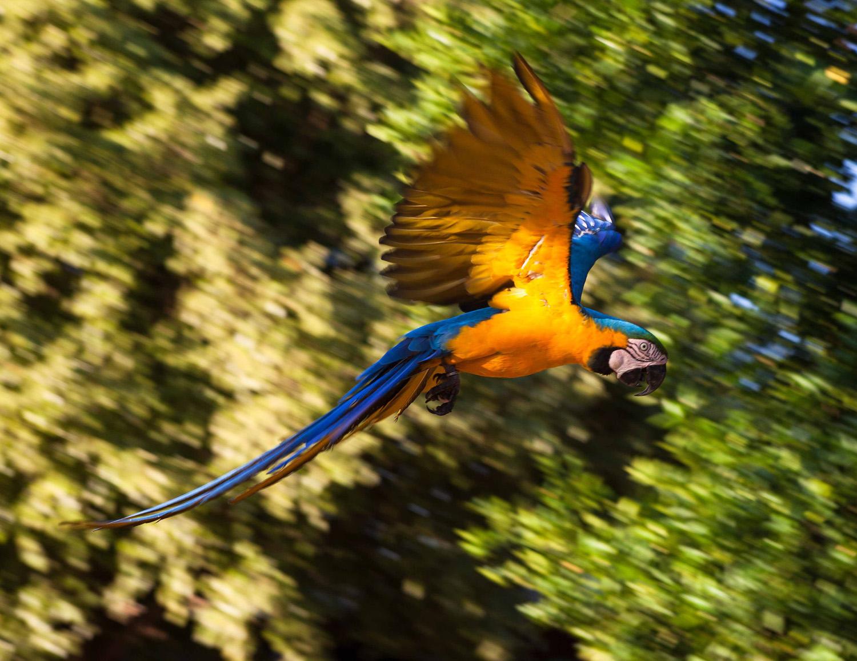 Pantanal-1428.jpg