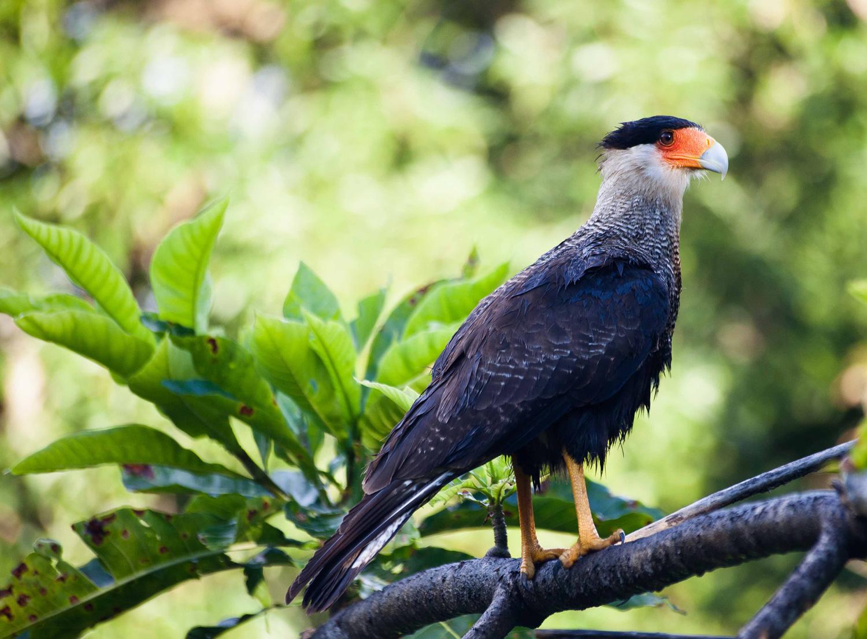 Pantanal-2264.jpg