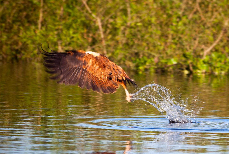 Pantanal-1249.jpg
