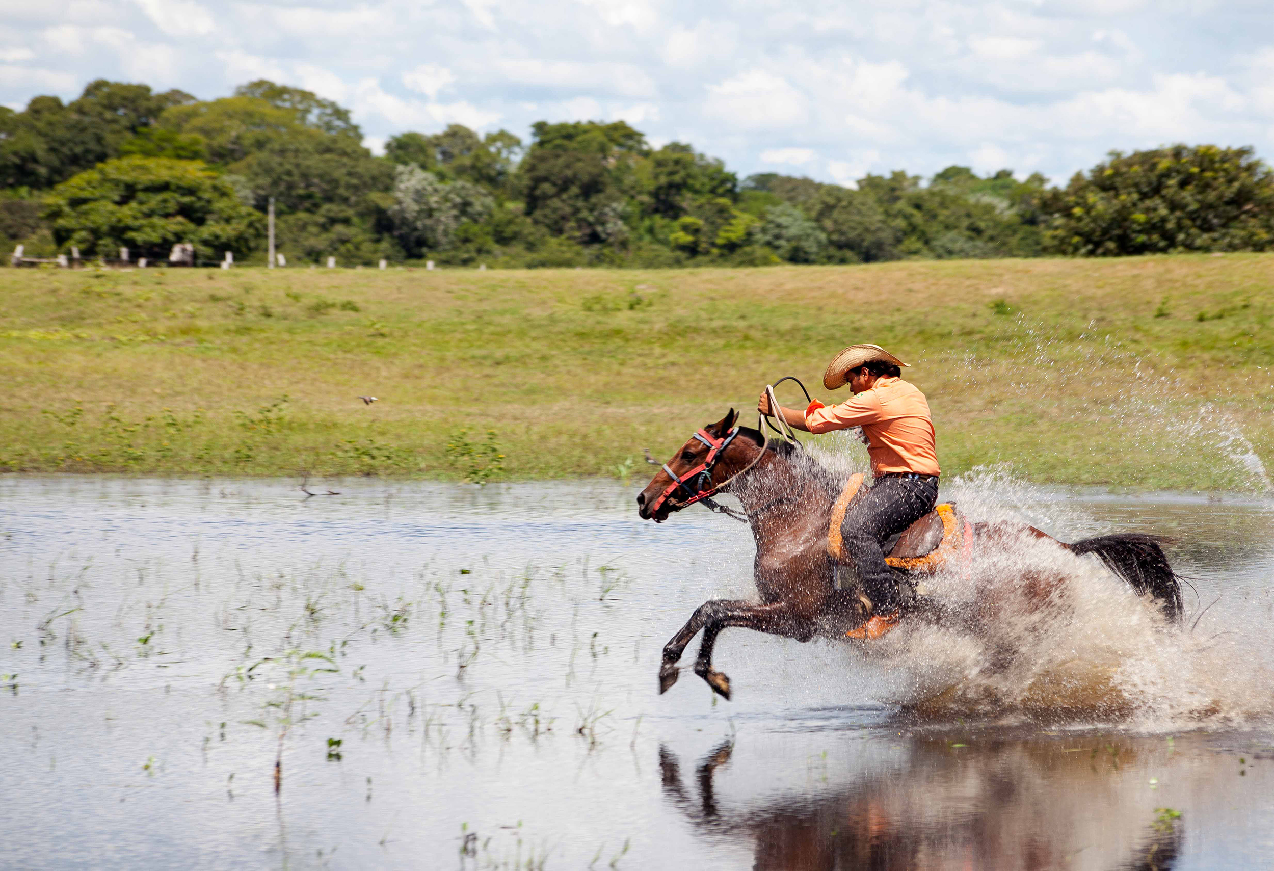 Pantanal-2147.jpg
