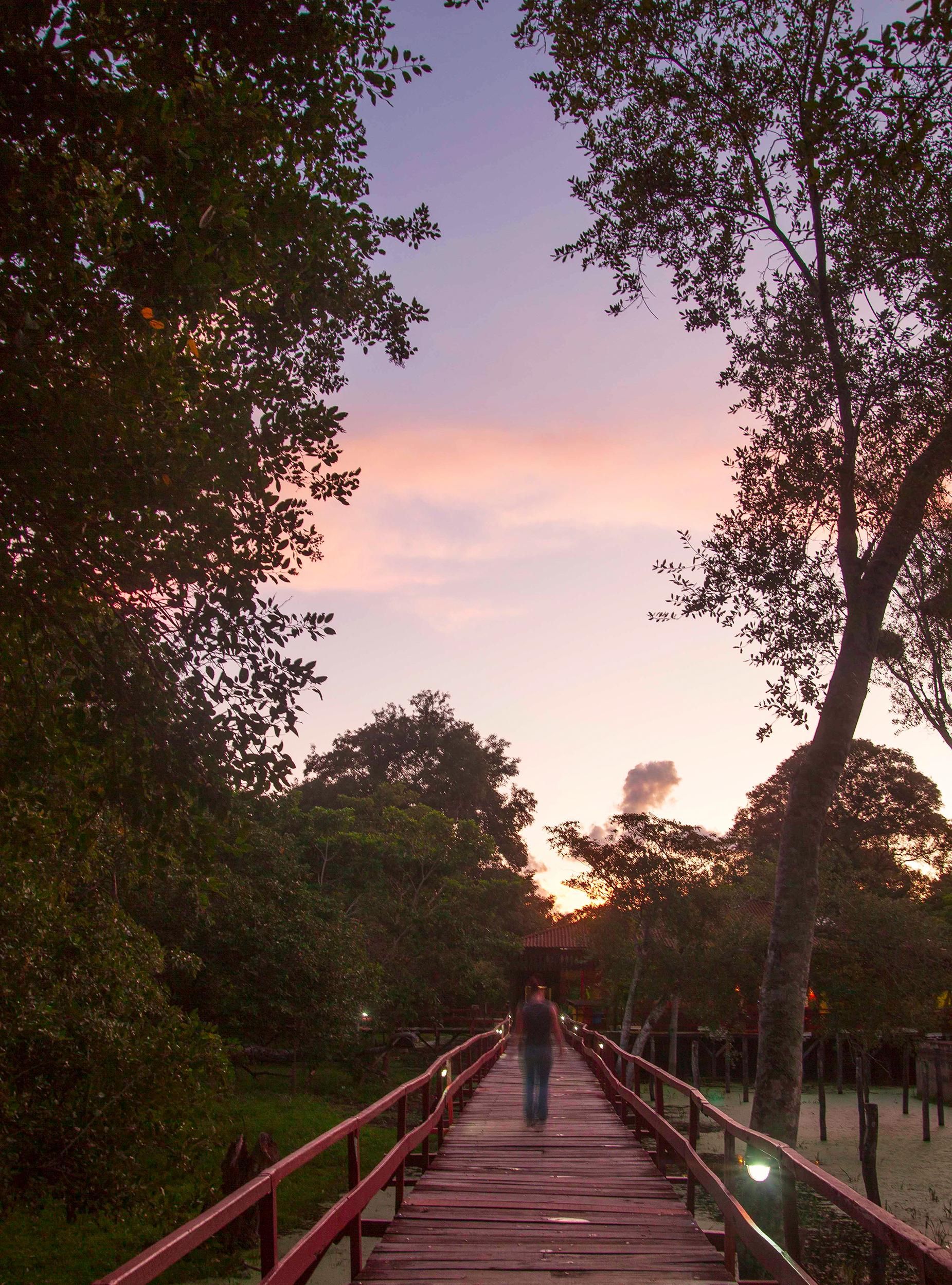 Pantanal-2284.jpg