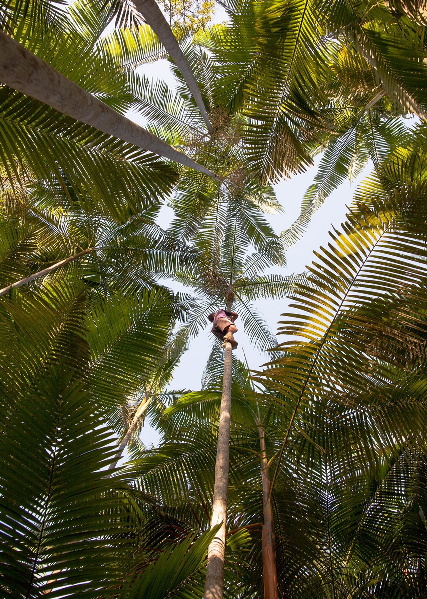 Açai_Pará-4210.jpg
