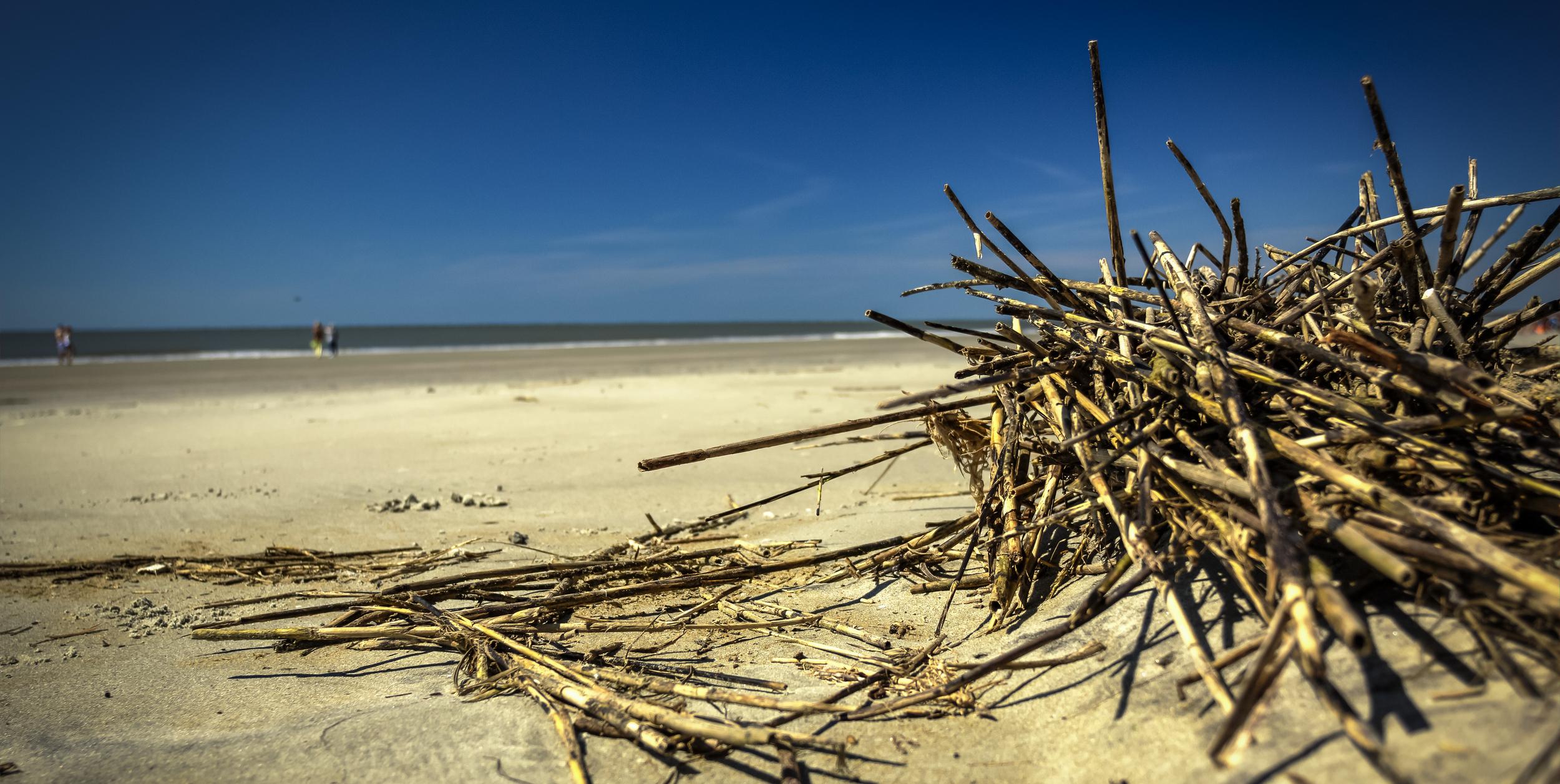 beach wood 1b.jpg