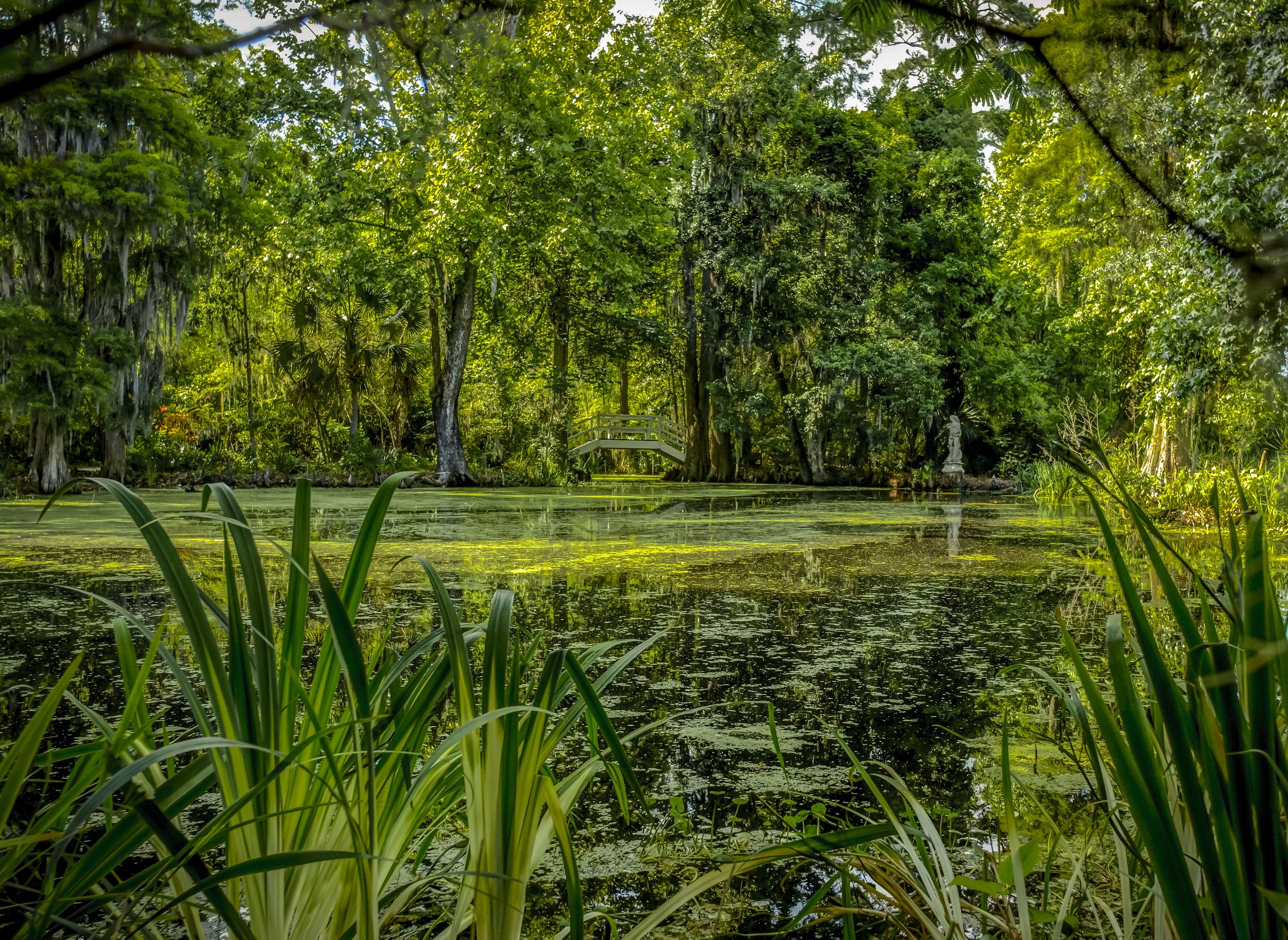 swamp 1.jpg