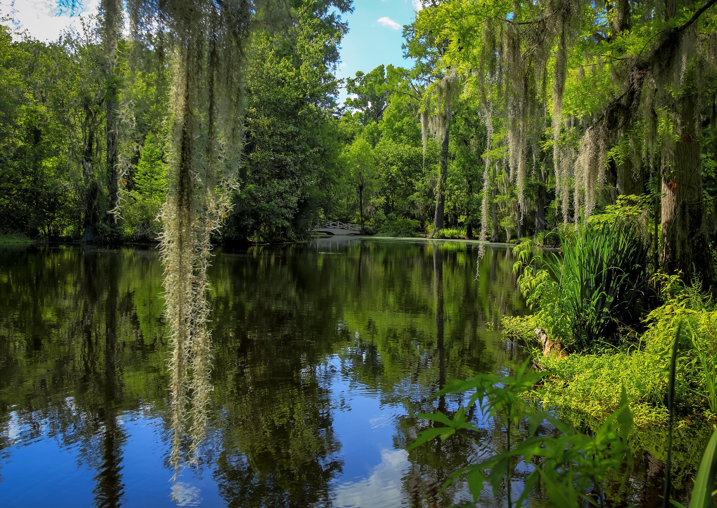 swamp 2.jpg