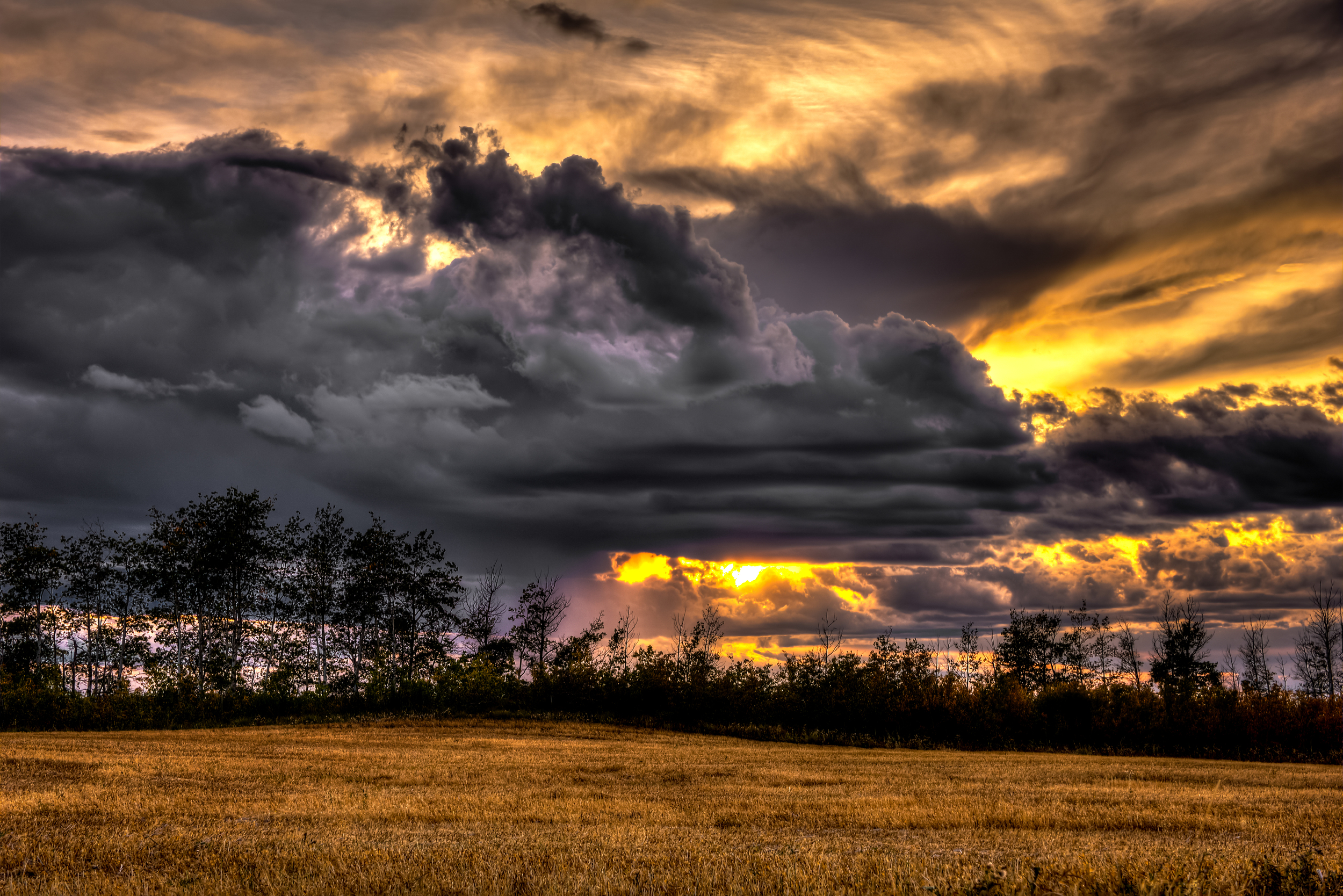 field sunset 3.jpg