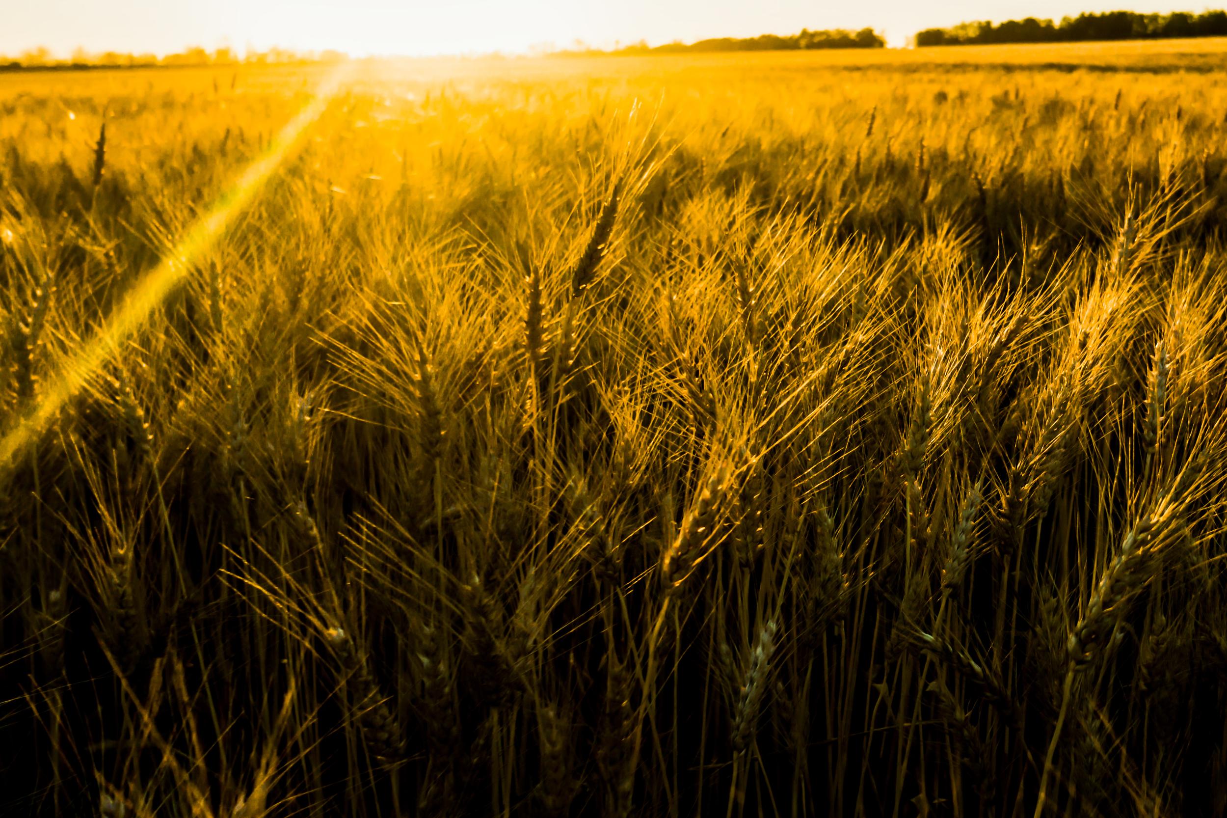 grain 1 a.jpg