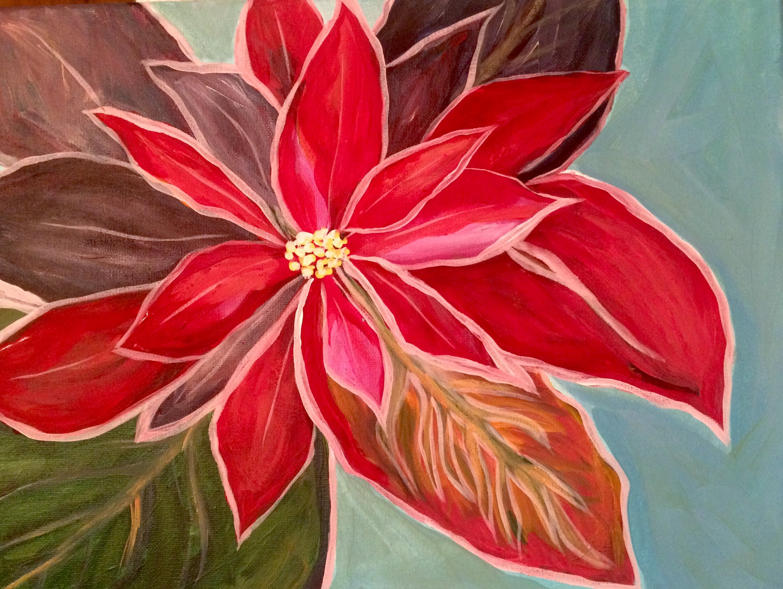 Colourful Poinsettia