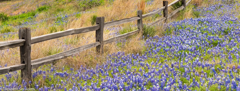 Texas — Beth Sexworth Photography