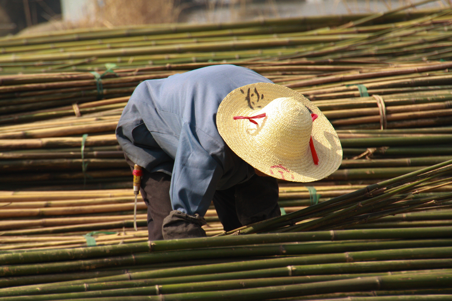 Commercial Bamboo Farming — Brightfields Natural Trading Company