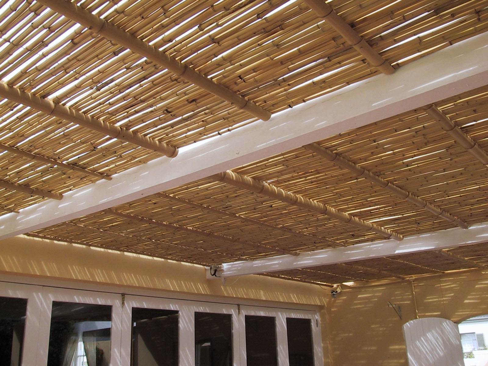 Natural bamboo under clear polycarbonate ceiling.jpg