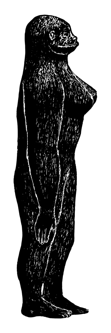 Late in the 1950s, William Roe reported his encounter (supposedly from earlier in the decade) with another obviously female Bigfoot in Canada. This drawing was produced by Roe's daughter, under his direction. I can't be the only one who thinks the anatomy here is a bit... gravity-defying. This is not the original drawing, but a re-drawing produced by John Conway for our  2013 book  The Cryptozoologicon: Volume One  . Image: John Conway.