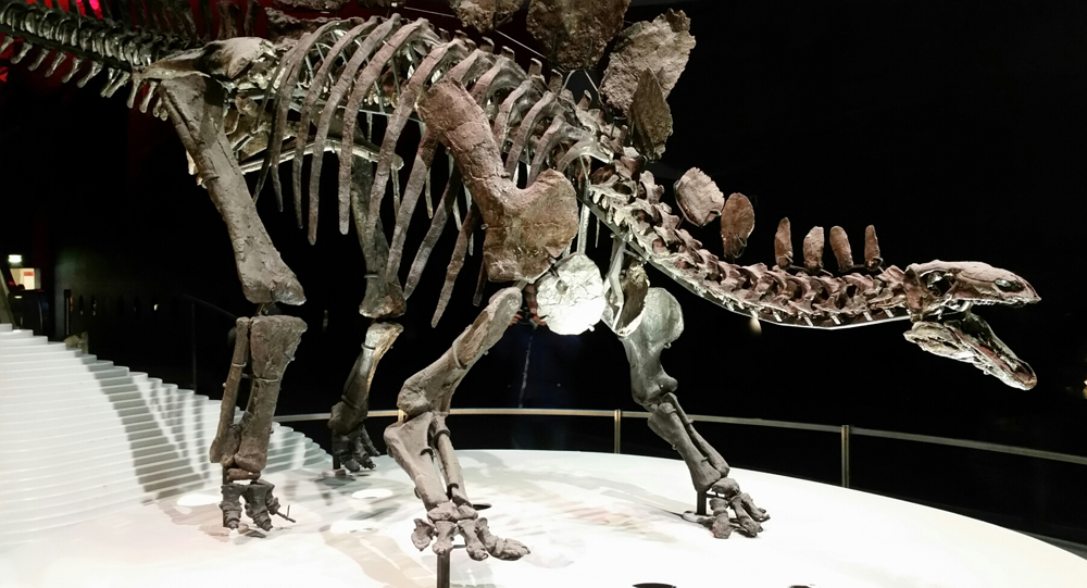 Sophie the  Stegosaurus - or NHMUK PV R36730, if you prefer - in person at the Natural History Museum, London. I'm sure many of us have an unreasonable number of photos of this amazing specimen. Image: Darren Naish.