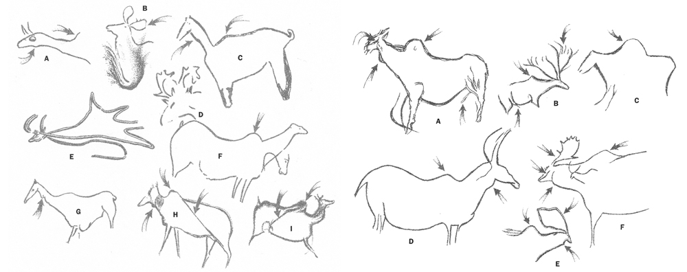 Cave art depicting  M. giganteus  is not all that numerous (most ancient depictions of deer are of reindeer or red deer), but what does exist shows several details worthy of note, here emphasised in illustrations produced by R. Dale Guthrie. The shoulder hump is a consistent feature. Image:  Guthrie (2005) .